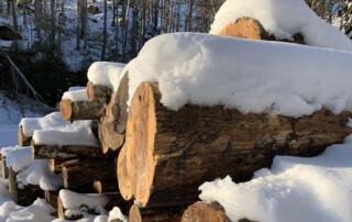 neve sui tronchi
